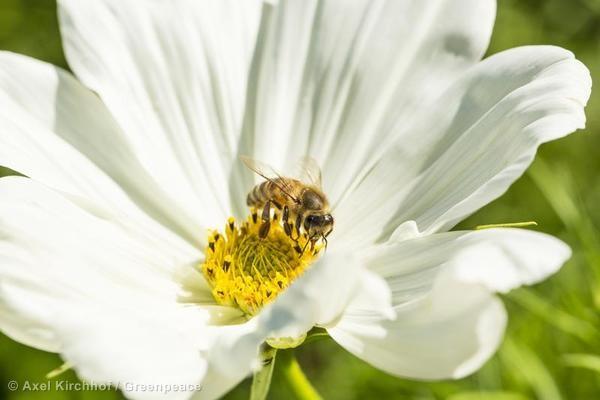 La importancia de las abejas es clave para la producción de alimentos