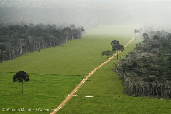 bosques  Greenpeace Espaa