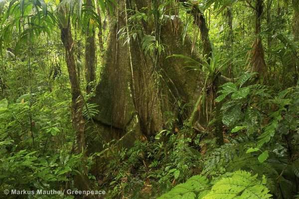Salvemos la amazonia de la deforestación