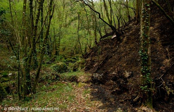 Situaci 243 N De Los Bosques Greenpeace Espa 241 A