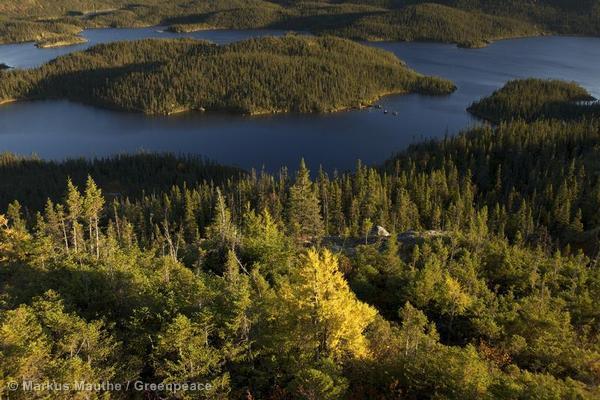 El bosque boreal en peligro