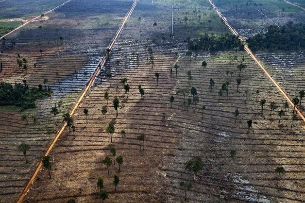 Resultado de imagen de plantaciones aceite de palma indonesia