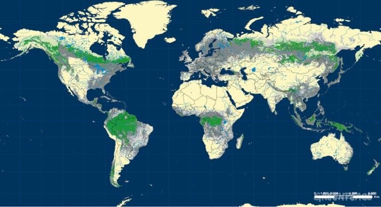 Greenpeace denuncia en el d a forestal mundial que s lo el for Plano de un vivero forestal